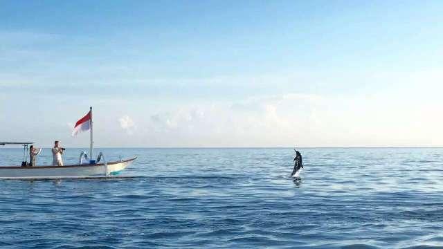 Lovina Dolphin Tours