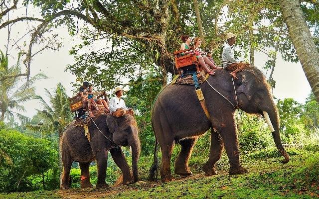 bali elephant safari ride