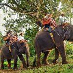 bali-elephant-safari-ride